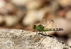 Free Dragonfly Stock Photo - 15321890