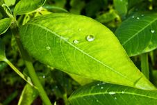 Free Leaf Stock Photography - 15322162