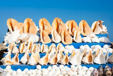 A Conch Shell Against Blue Sky Background Royalty Free Stock Photography