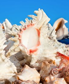 Free Beautiful Shell Against Blue Sky Background Stock Photography - 15323422