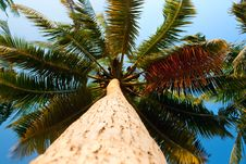 Free Fan Palms Against The Sky Useful For Background Stock Photos - 15323423