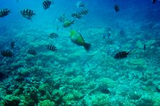 Free Underwater Landscape Of Red Sea. Stock Images - 15323954