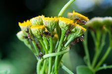 Free Ants Stock Photo - 15324190