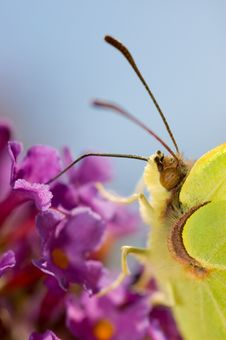 Free Butterfly On Flower Royalty Free Stock Photos - 15324528