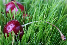 Free Sweet Cherry Stock Image - 15324671