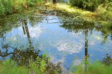 Free Blue Sky Is Reflected In Pond Stock Photos - 15326163