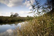 Free Reeds On The Samara River Royalty Free Stock Image - 15327346