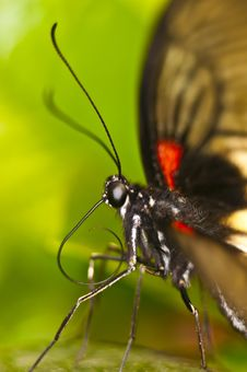 Free Butterfly Stock Image - 15328501