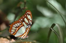 Free Macro Of A Colorful Butterfly Stock Photo - 15329460