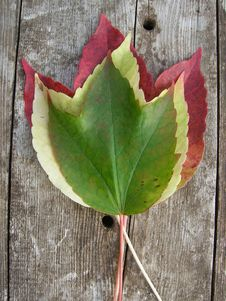 Free Three Autumn Leaves Stock Photo - 15329880