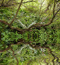 Free Rain Forest Stock Images - 15330294