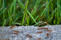 Free Ants In Action Royalty Free Stock Photography - 15333747