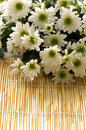 Free Flower Royalty Free Stock Photo - 15334335