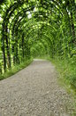 Free Canopy Of Leaves Royalty Free Stock Images - 15335179