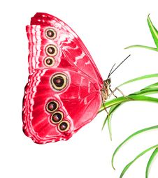 Free Beautiful Butterfly Stock Photos - 15330203