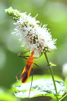 Free Assassin Bug Stock Photos - 15332933