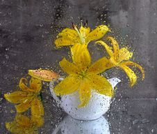 Still Life With A Yellow Lily After Glass Stock Images