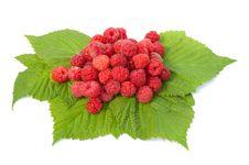 Free Fresh Raspberry Isolated Over White Stock Photo - 15334180