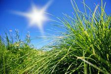 Free Wild Grass Stock Image - 15334571