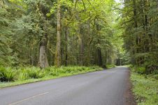 Free Country Road In Rain Forest Stock Image - 15334971
