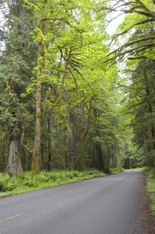 Country Road In Rain Forest Stock Photography