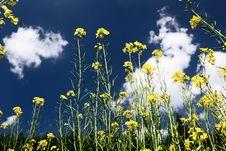 Free Beautiful Landscape In Grassland Royalty Free Stock Photo - 15335545