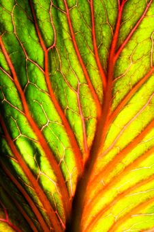Free Brightly Colored Abstract Leaf Stock Photos - 15336233