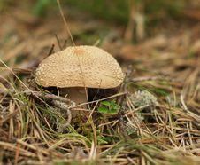 Free Toxic Mushroom Stock Photos - 15337103