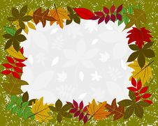 Frame With Leaves Stock Photo