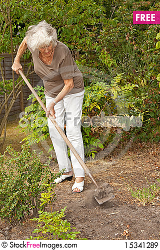 Stock illustrations senior citizen lady with a sign stock clipart - Mature Lady Gardening Free Stock Photos Amp Images