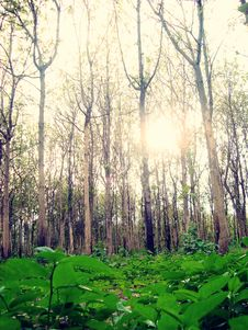 Free Forest Royalty Free Stock Photography - 15340187