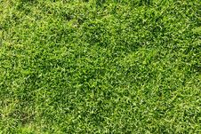Free Grass Lawn Royalty Free Stock Image - 15341186