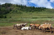 Free Horses Grazing Royalty Free Stock Photos - 15341328