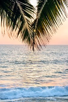 Free A Palm Tree In Front Of The Sunset Stock Photography - 15341412