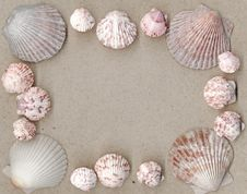 Free Scallop Shell Frame Stock Photos - 15341533