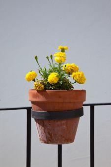 Free Flowerpot Stock Images - 15342334