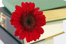 Free Pile Of Books With A Flower. Stock Image - 15345101