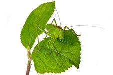 Locust Stock Photography