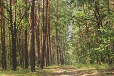 Free Forest Road. Stock Photography - 15350062