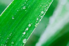 Free Plants After A Rain Stock Images - 15350074