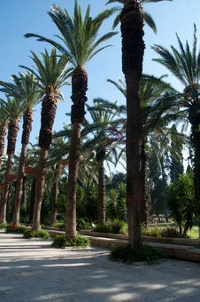 Free Palm Avenue In The City Park. Royalty Free Stock Photography - 15351567