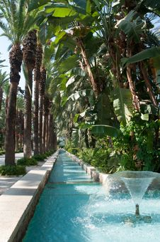 Fountain Surrounded By Palm Trees. Royalty Free Stock Images
