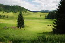 Beautiful Alpine Meadow Stock Photo