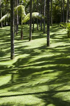 Free Green Lawn In A Palm Grove Stock Images - 15352134