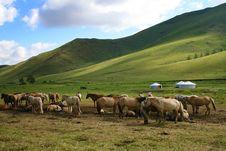Free Grazing Horses Stock Photo - 15352980