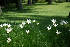 Free Spring In The Air Royalty Free Stock Photography - 15355247