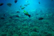 Free Underwater Landscape Of Red Sea. Stock Photography - 15358502