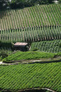 Free Intensive Crop Farming Stock Photos - 15362763