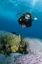 Free Female Scuba Diver Stock Image - 15366571