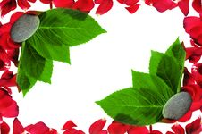 Red Petals Stock Images